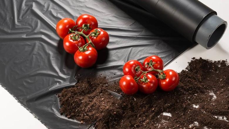 mulching_plástico_biodegradável (Foto: BASF/Divulgação)