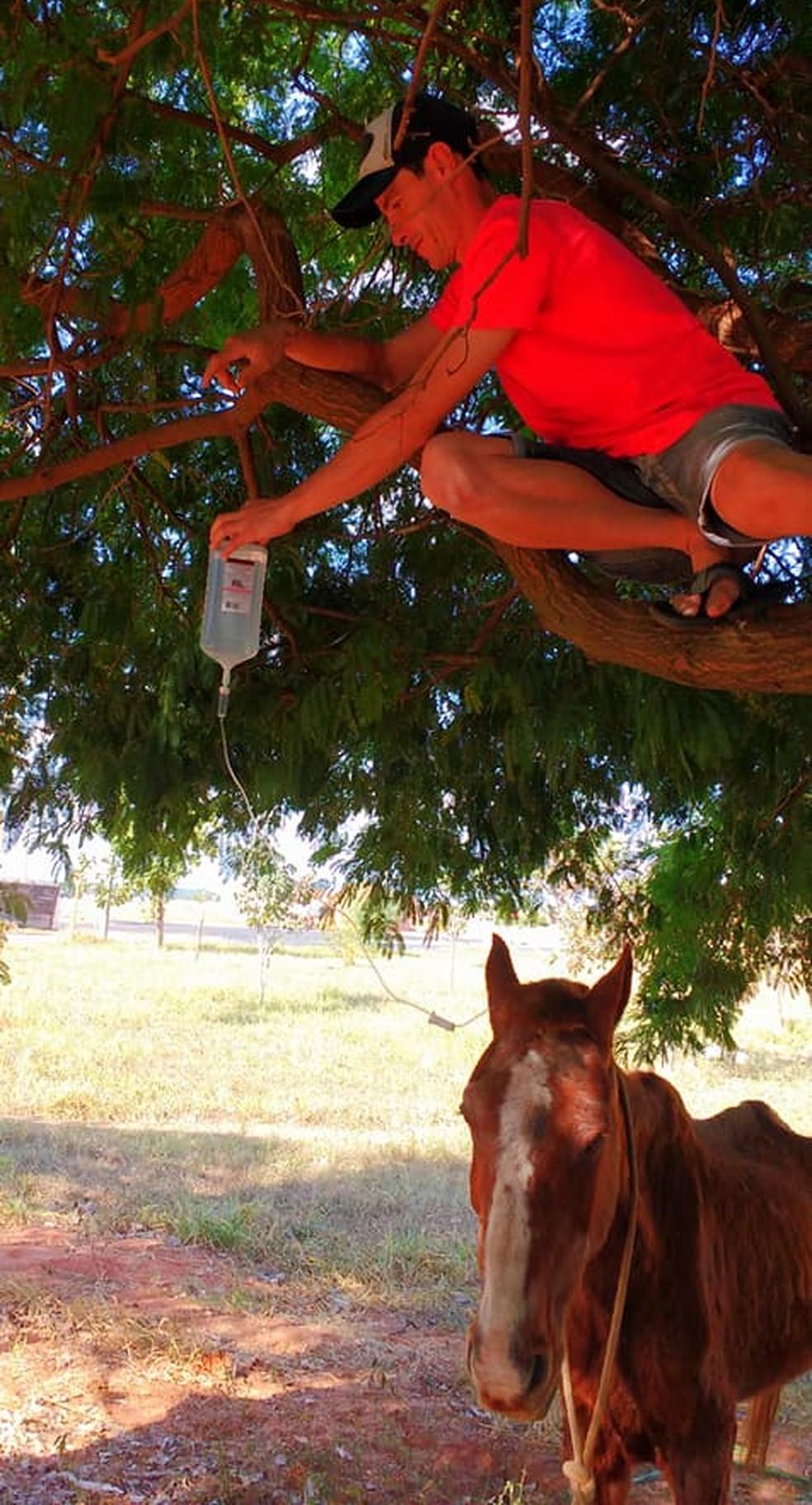 Homem sobe em árvore para segurar a bolsa de soro de um cavalo que era maltratado em Novo Horizonte (SP) (Foto: Arquivo pessoal)