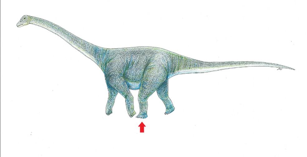 Paleontólogo explica que osso deve pertencer a um titanossauro, espécie herbívora que viveu no centro-oeste paulista — Foto: Okayama University of Science/AFP