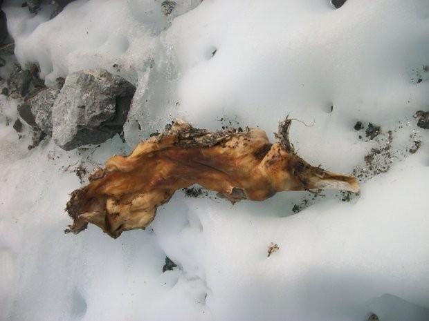 Restos mortais de algum ocupante de avião da Air India caído nos Alpes franceses