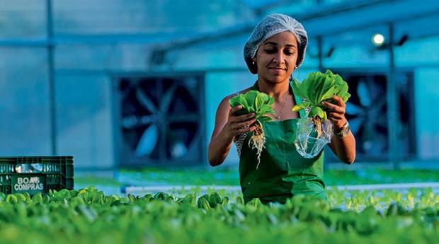 Agricultura Urbana (Foto:  )