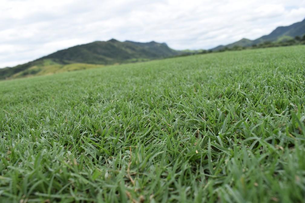 Novo gramado do Maracanã é cultivado em Saquarema (Foto: Gustavo Garcia)