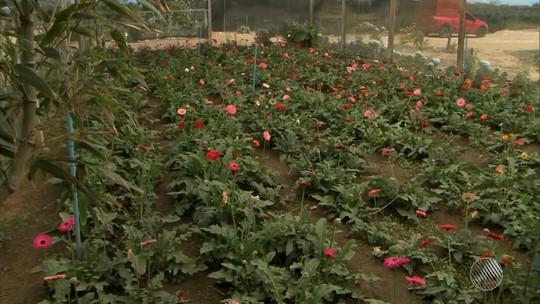 'Capital das flores' gera emprego na BA e espera 'boom' com primavera