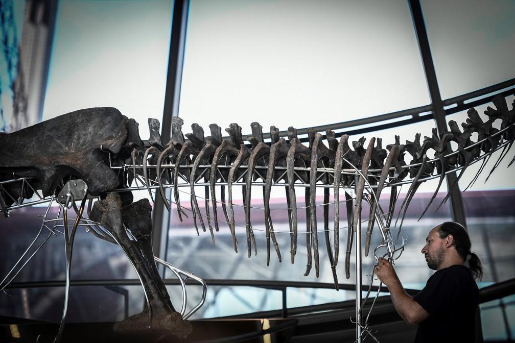 Esqueleto foi leiloado nesta segunda-feira em Paris (Foto: Stephane de Sakutin/AFP)