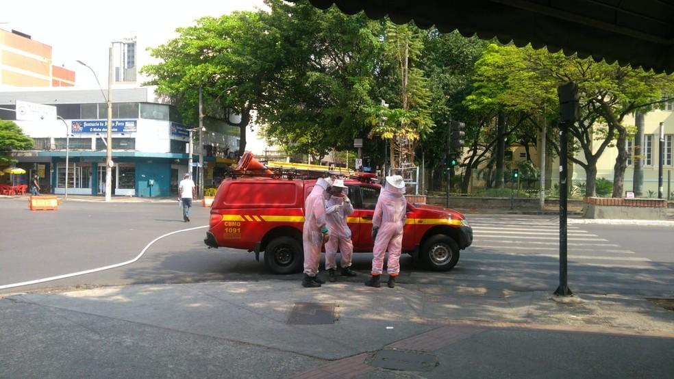 Queimadas intensificam presença de abelhas em áreas urbanas e ataques por  enxames; VÍDEO   Minas Gerais   G1