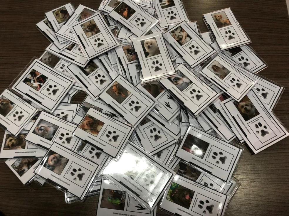 'RGs' para pets fazem sucesso em clínica veterinária do interior de SP  — Foto: Arquivo pessoal