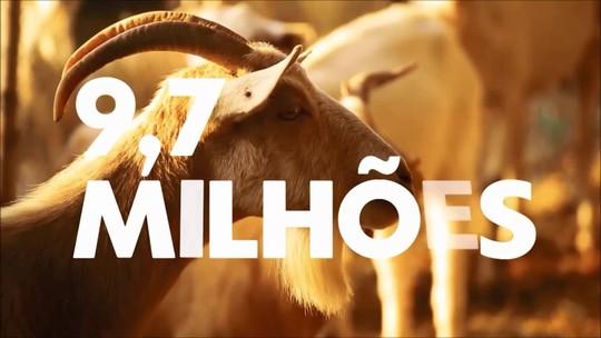 Brasil tem rebanho de quase 10 milhões de cabras