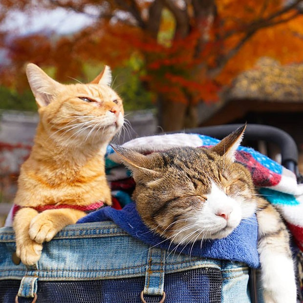 Daisuke Nagasawa precisa viajar por conta do trabalho. (Foto: Instagram/the.traveling.cats)