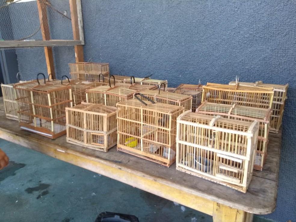 Pássaros presos em gaiolas foram encontrados pela polícia em agosto (Foto: Divulgação/Batalhão Ambiental)