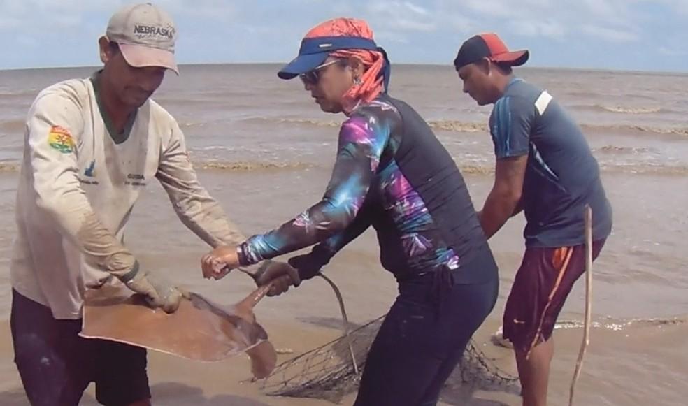 Espécies foram coletados e levados para análise  — Foto: Iepa/Divulgação