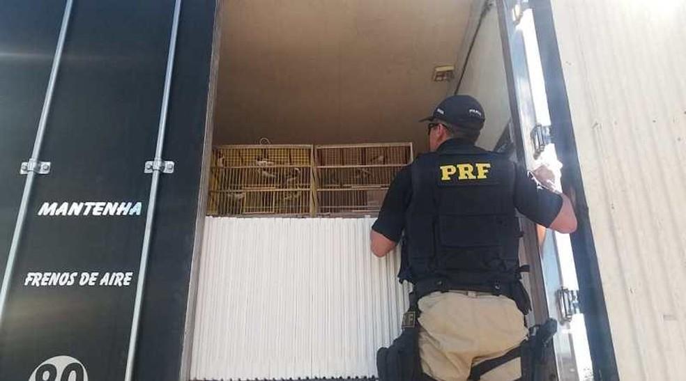 PRF flagrou crime ambiental e resgatoua animais silvestres escondidos em caminhão de carga na Bahia — Foto: Divulgação/PRF