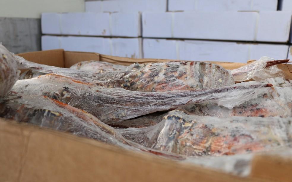 Parte da carga de lagosta que foi roubada no RN foi recuperada na Bahia (Foto: Divulgação/ SSP-BA)