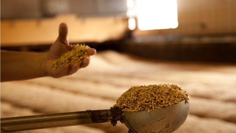 agricultura_malte_cerveja_fabrica (Foto: Marcelo Curia/Ed. Globo)
