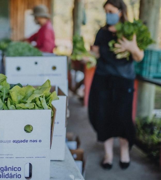 Projeto arrecada cestas de orgânicos para doação e gera renda para produtores