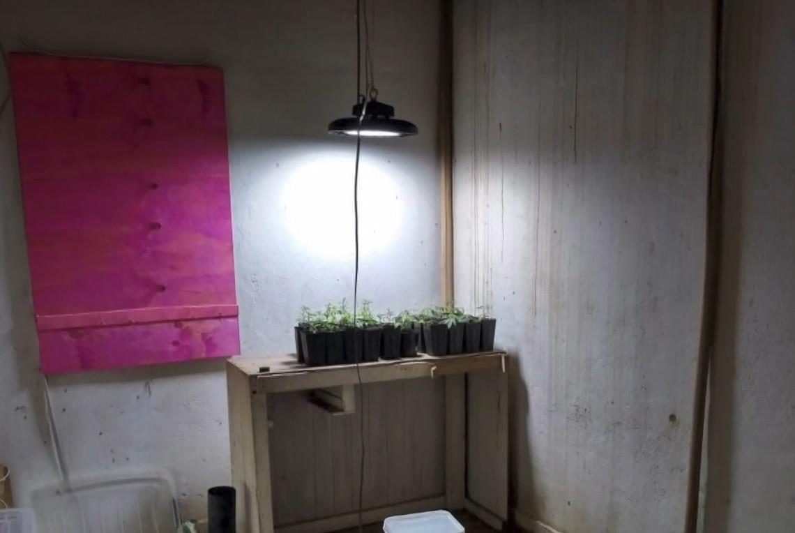 Laboratório de maconha é descoberto em casa abandonada em Alfredo Chaves, no ES