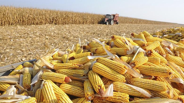 milho-colheita-publi-caixa (Foto: Thinkstock)