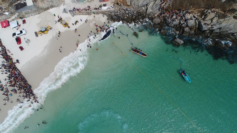 Foto aérea mostra centenas de pessoas acompanhando o resgate da baleia em Arraial do Cabo, no RJ (Foto: Ricardo Malta/Arquivo pessoal)