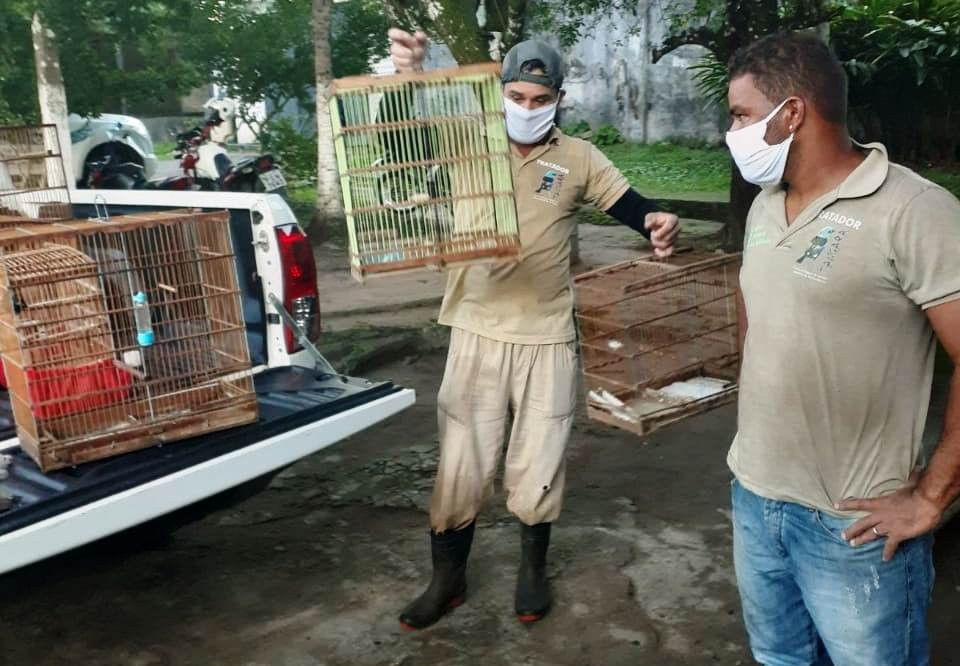 Operação resgata 20 animais silvestres que seriam comercializados no Agreste