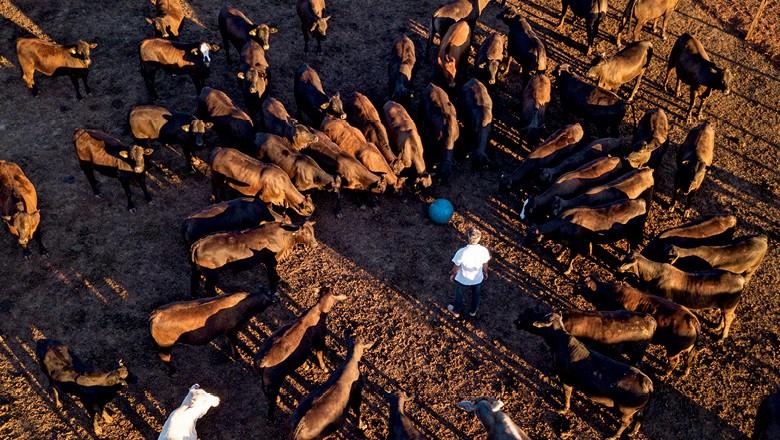 Bem-estar animal - Confinamento no Recanto da Vó Cidinha, em Nhandeara (SP) (Foto: Fernando Martinho)