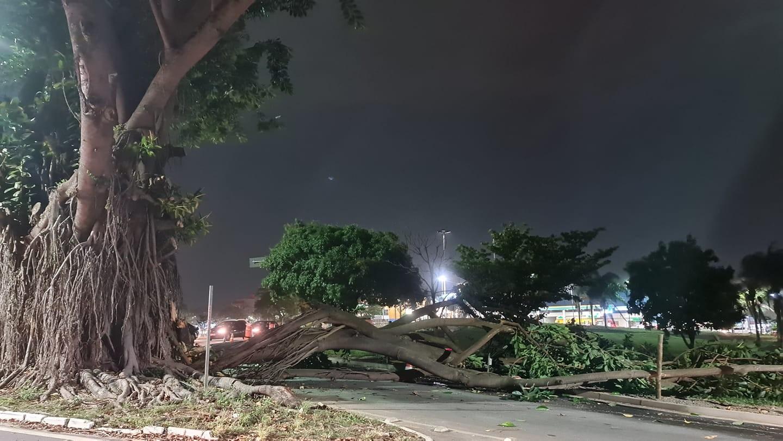 Tronco de árvore cai na avenida Dom Pedro I e bloqueia parte de rotatória em Taubaté