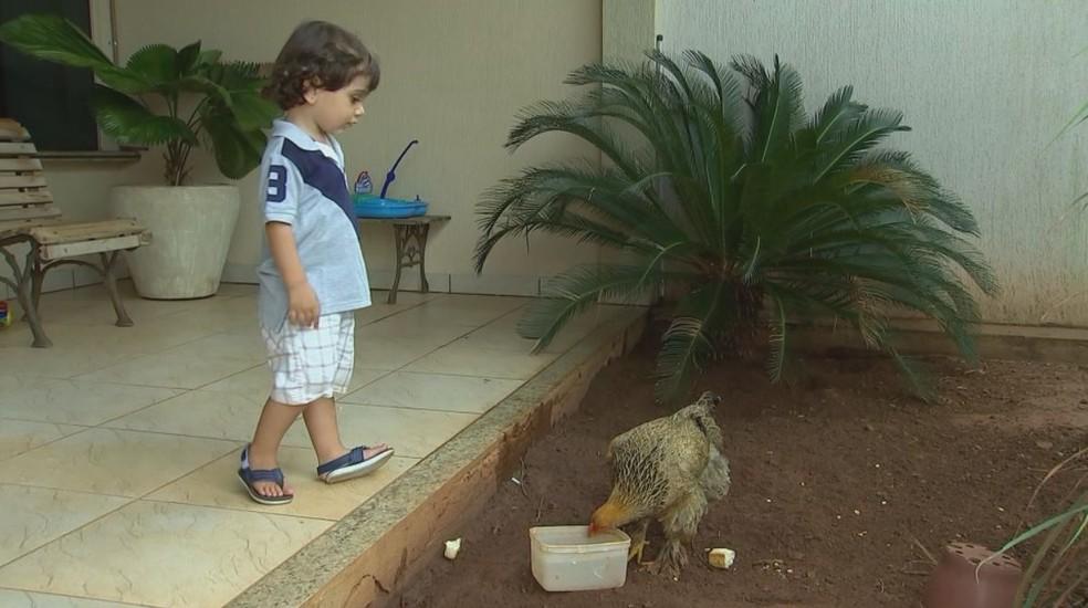 Arthur trata a galinha, hoje com 6 meses, como se fosse uma irmãzinha (Foto: Reprodução/TV TEM)