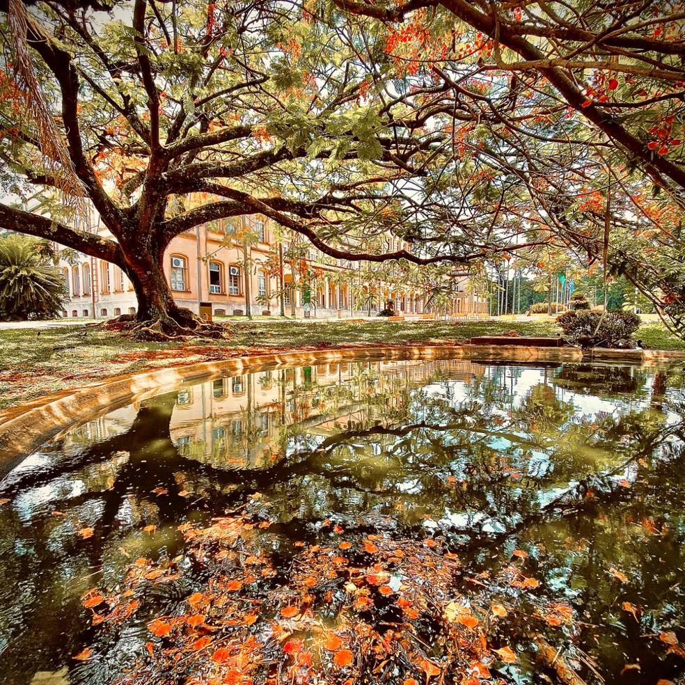 Foto que ficou em primeiro lugar no concurso fotográfico Árvores de Pira Contando nossa História, em Piracicaba — Foto: Ivo Zution Gonçalves