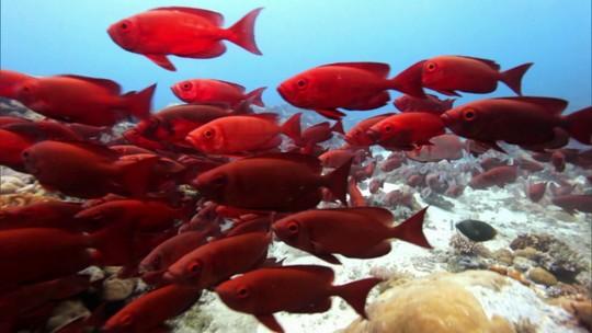 Globo Natureza: Mergulho na Micronésia