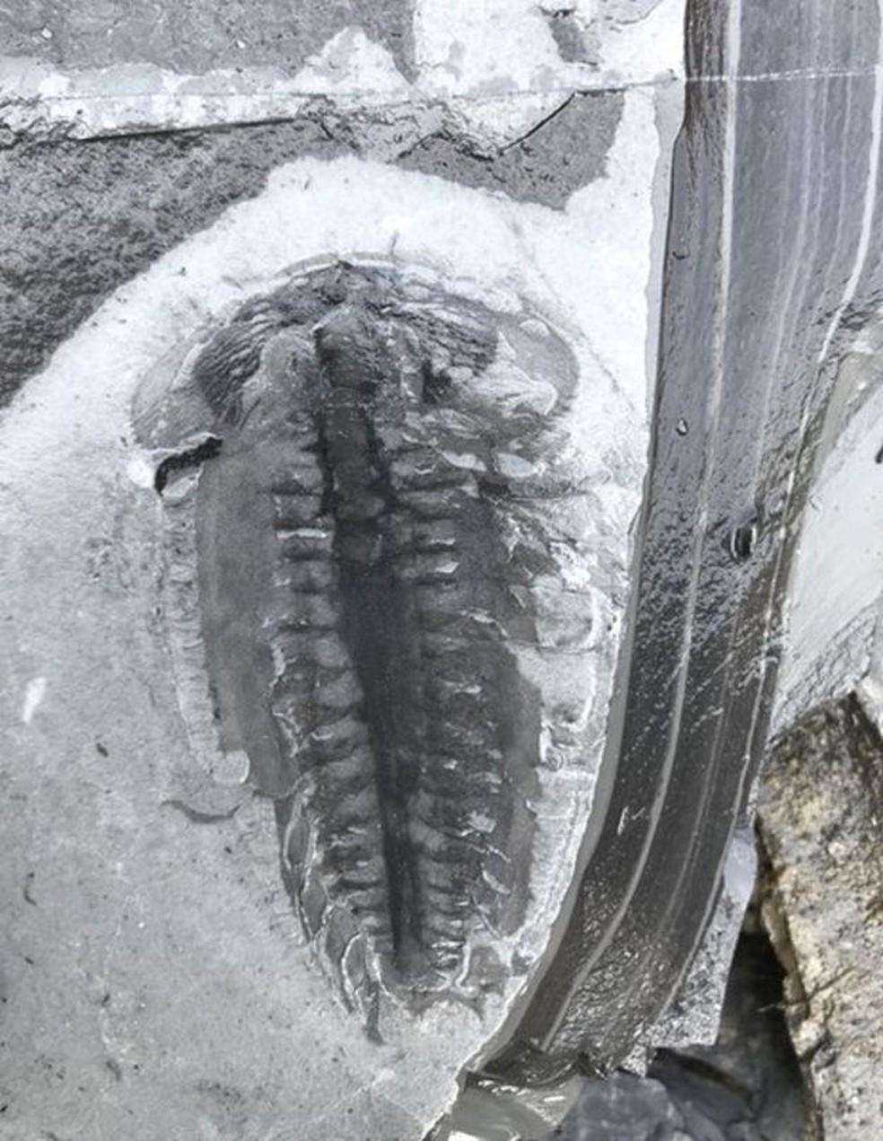 Mais de 20 mil amostras foram coletadas, e um total de 4.351 fósseis foram analisados até agora — Foto: ROBERT GAINES/BBC