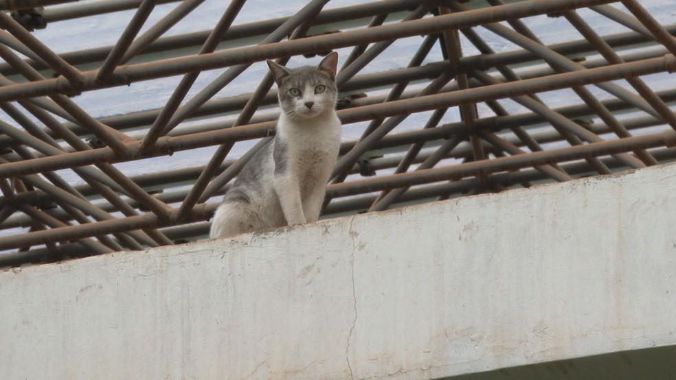 Resultado de imagem para gatos ficam presos teatro
