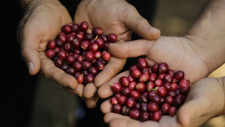 café-grão-cafeicultura (Foto: Federação dos Cafeicultores do Cerrado)
