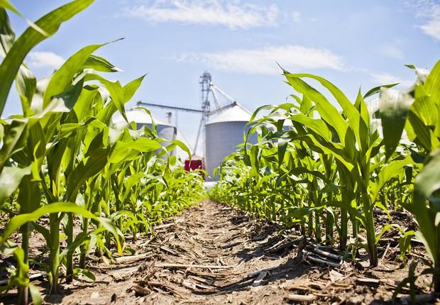 Lavoura com sementes da Dow/DuPont ; agricultura ; agronegócio ; colheita ;  (Foto: Reprodução/Facebook)
