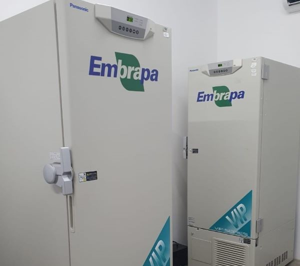 Ultrafreezers da Embrapa emprestados ao município de Fortaleza podem armazenar 200 mil doses de vacina (Foto: Embrapa/Divulgação)