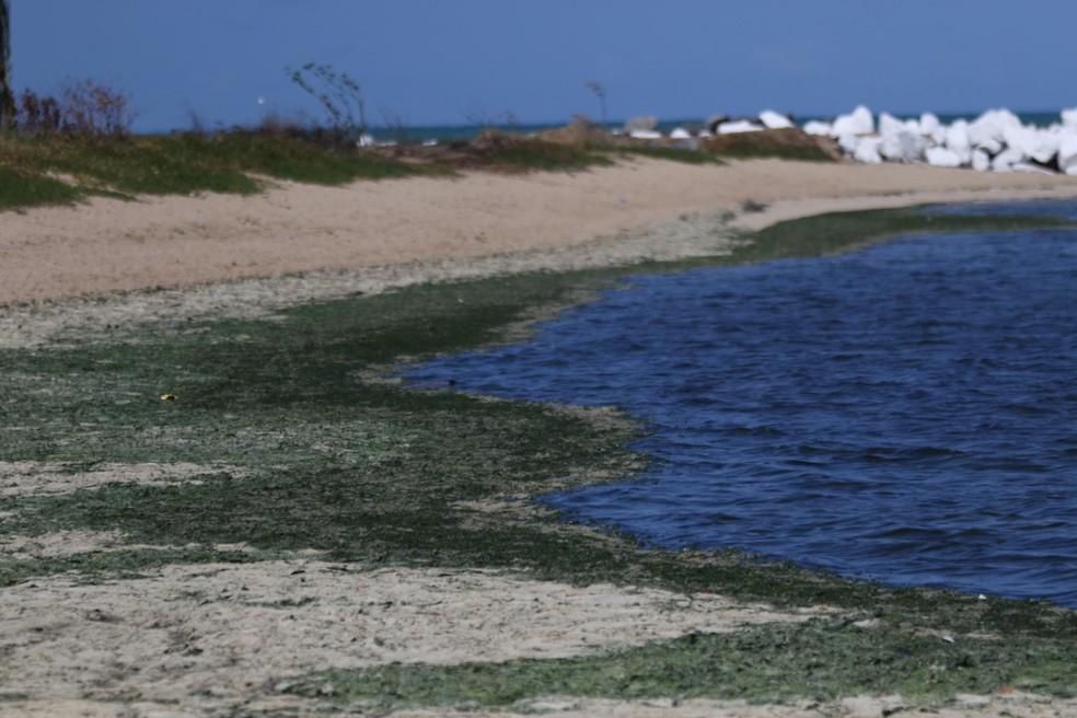 As algas estão espalhadas na faixa de areia da Praia de Rio Doce, em Olinda — Foto: Aldo Carneiro/Pernambuco Press
