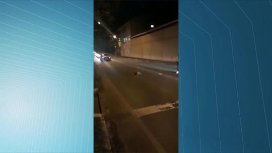 Bicho-preguiça para trânsito no ES e é aplaudido por motoristas