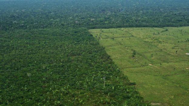 Desmatamento para pasto na Amazônia também é alvo de crítica de cientistas (Foto: Getty Images/BBC)