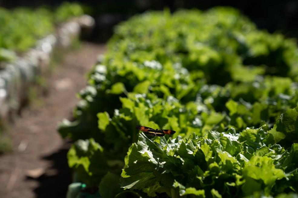 Mais de 2 toneladas de alimento são produzidas por mês. Foto: Marcelo Brandt/G1.