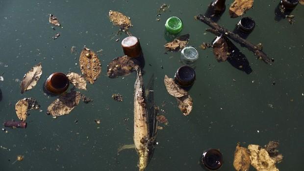 Garrafas de cerveja flutuam na água; poluição (Foto: Mario Tama/Getty Images)