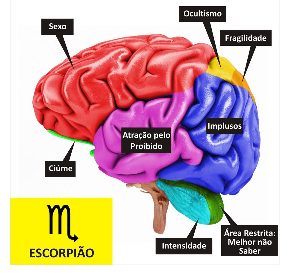 Cérebro de Escorpião  (Foto: TV Globo )