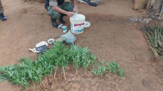 Duas pessoas são presas com aproximadamente 40 pés de maconha em Cambuquira, MG