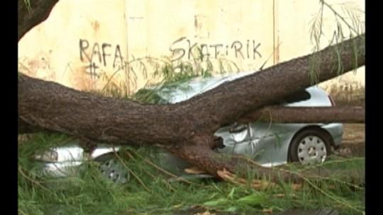 Chuva forte no final da tarde desta quinta-feira causa estragos em Altamira