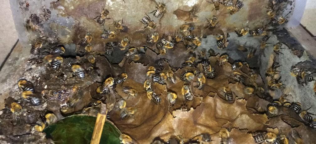 Colmeia de abelhas sem ferrão na casa da freira Helen, em Nova Esperança, Salvador — Foto: Lílian Marques/ G1