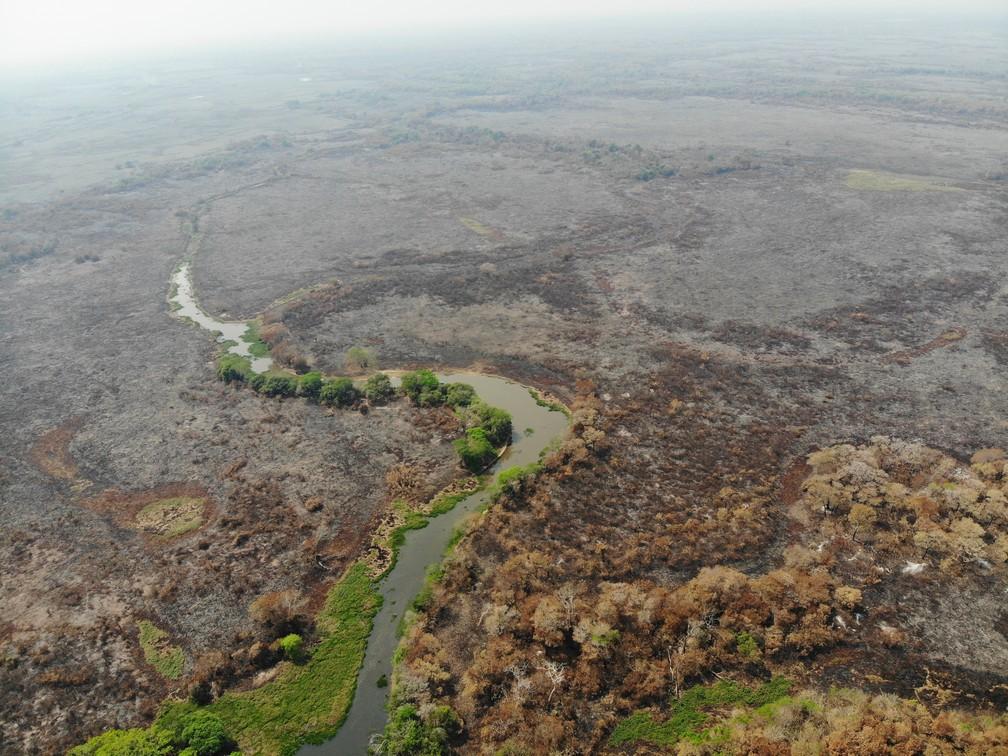 Imagem que mostra devastação em Pantanal teve mais de 160 mil reações no Facebook nos últimos dias — Foto: GUSTAVO FIGUEIRÔA/SOS PANTANAL