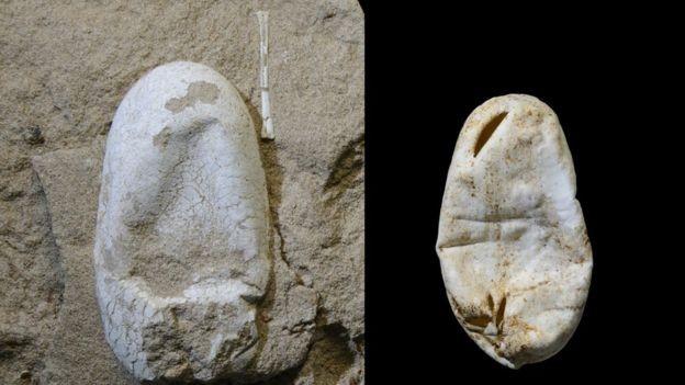 Os ovos de pterossauro não tinham a casca dura, mas mole, assim como os ovos de cobra (Foto: W. GAO/Via BBC News Brasil)