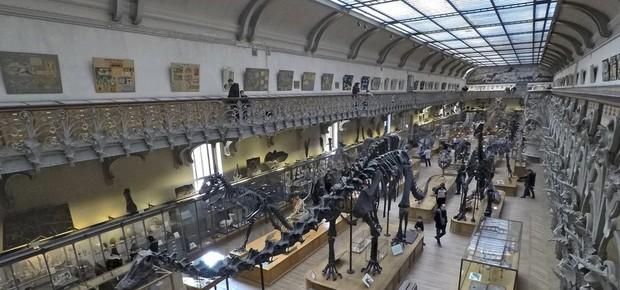 Museu em Paris é um dos maiores do mundo, ao lado do de Londres  (Foto: Divulgação/MNHN)