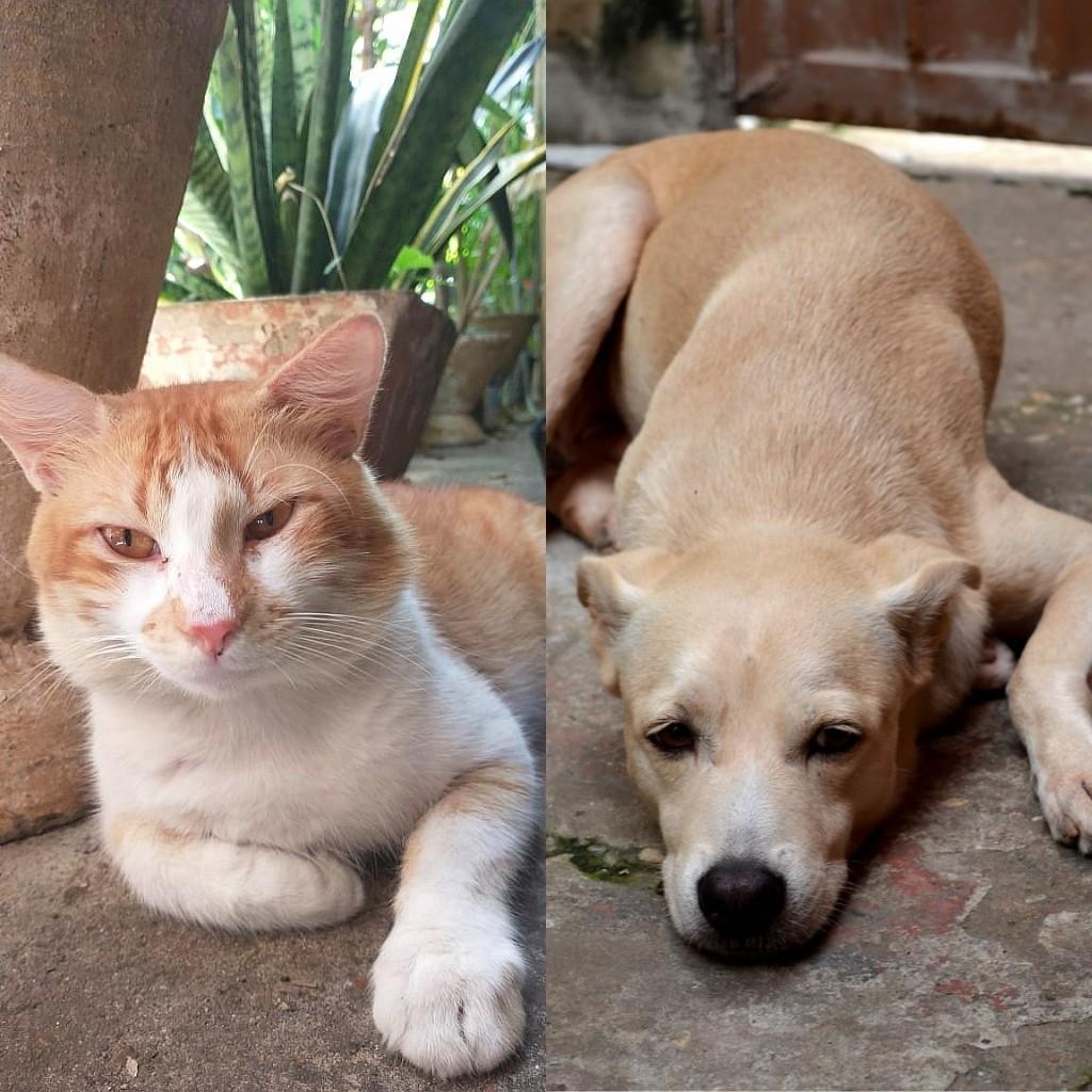 Igreja de Teresina realizará benção virtual em mais de 500 fotos de animais de estimação