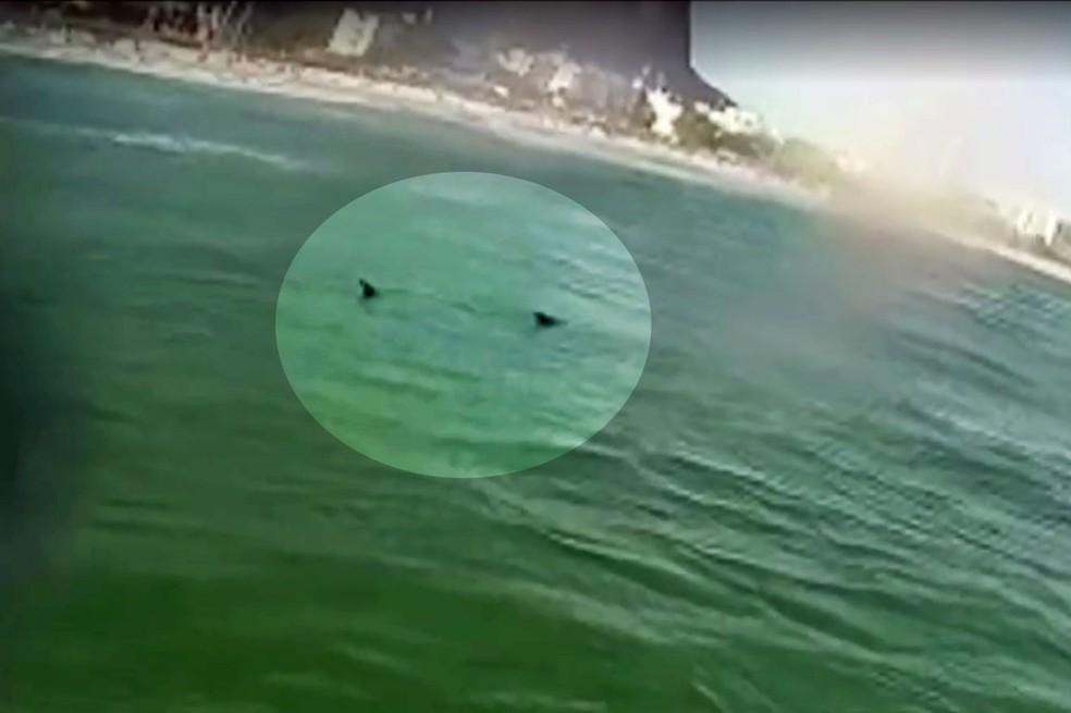 Tubarão no mar da Barra da Tijuca (Foto: Marcelo Alegria/Reprodução/Arquivo pessoal)