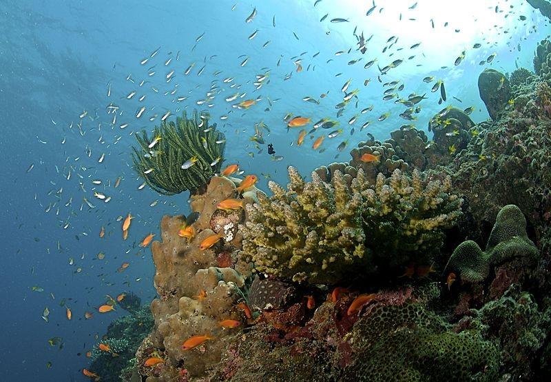 Menos de 5% de ecossistemas costeiros, como recifes de corais, estão em áreas de preservação  (Foto: Ritiks/ Wikimedia Commons)