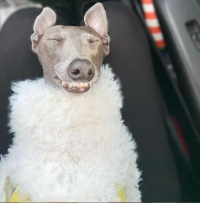 Cães viralizam com looks de inverno na rede social