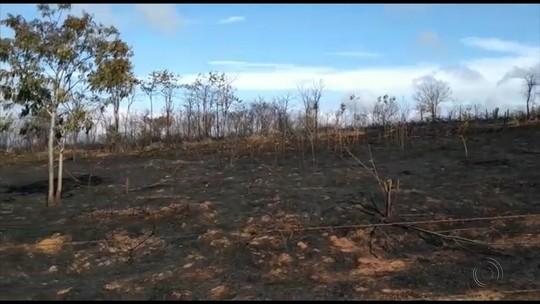 Incêndio atinge fazenda e reserva ecológica e mata animais em Promissão