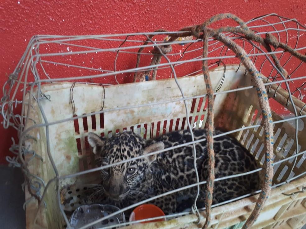 Animal tem entre 2 e 3 meses e foi levado para avaliação veterinária (Foto: Corpo de Bombeiros/Divulgação)